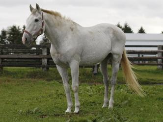 ビワハヤヒデのたてがみも切り取られる被害 93年菊花賞の名馬